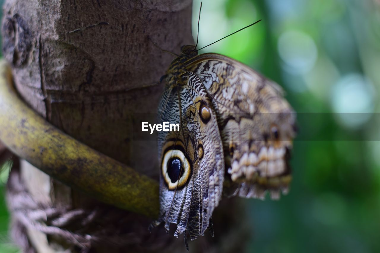 one animal, animal themes, animals in the wild, close-up, animal wildlife, focus on foreground, day, no people, nature, outdoors, reptile, beauty in nature, tree, bird