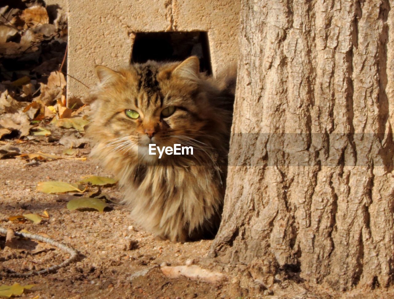 domestic cat, animal themes, domestic animals, one animal, feline, no people, pets, mammal, day, outdoors, sitting, close-up