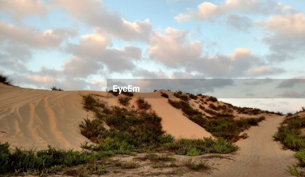 sky, cloud - sky, tranquil scene, scenics - nature, tranquility, beauty in nature, environment, landscape, sand dune, non-urban scene, land, plant, sand, nature, desert, no people, remote, day, idyllic, arid climate, climate