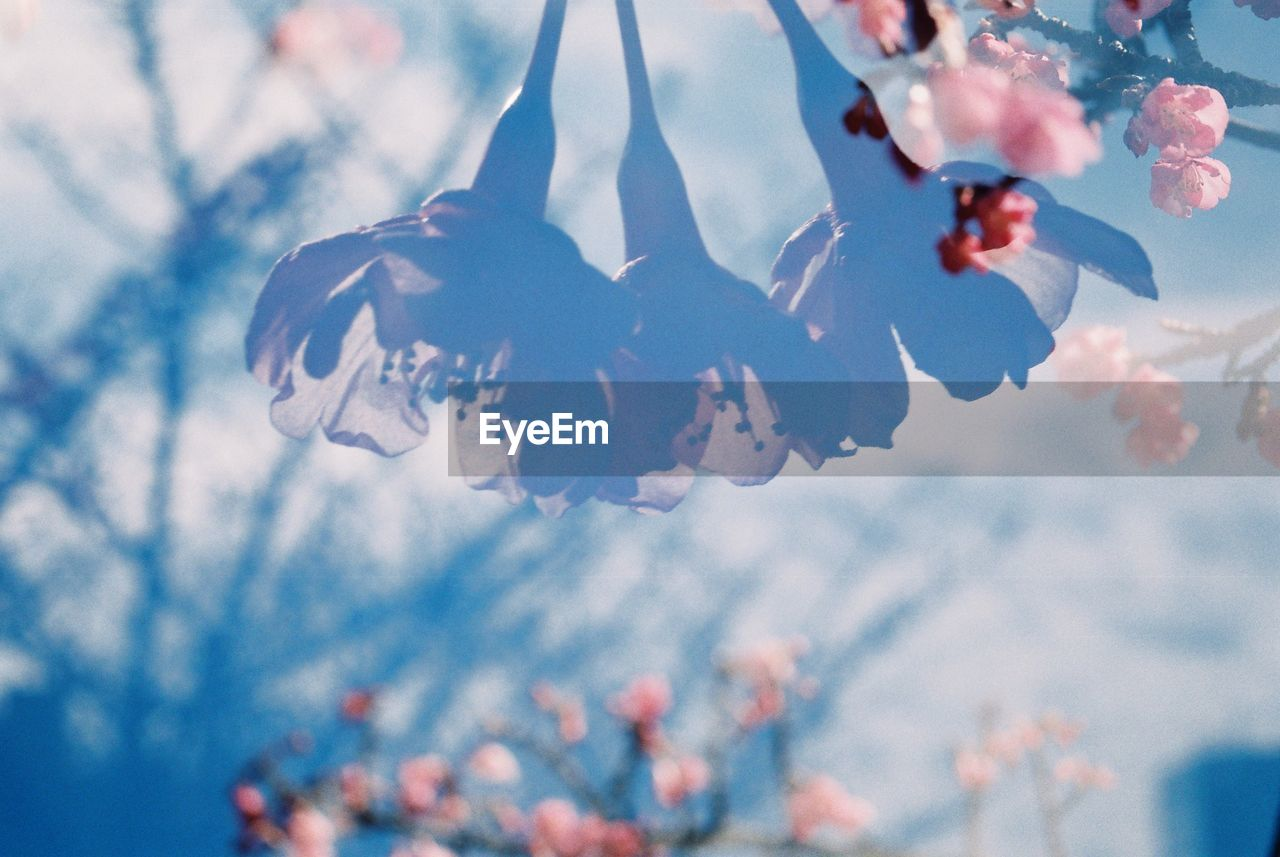 no people, focus on foreground, close-up, celebration, low angle view, tree, hanging, outdoors, day, sky, nature, beauty in nature, fragility