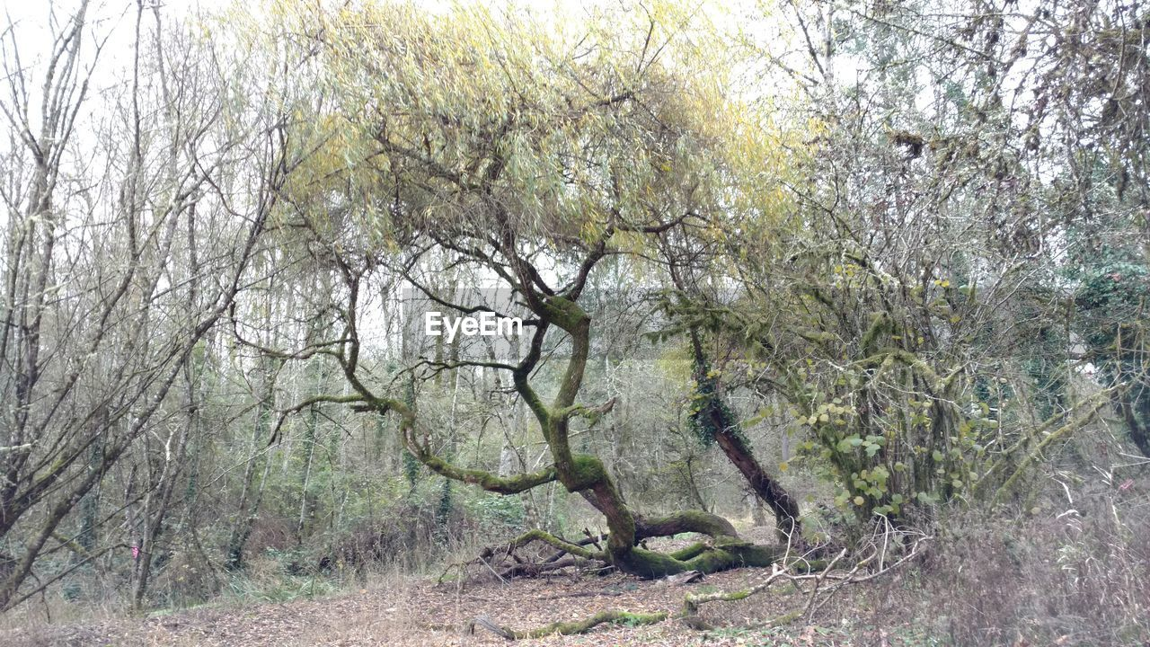 nature, tree, growth, landscape, forest, outdoors, branch, no people, day, beauty in nature