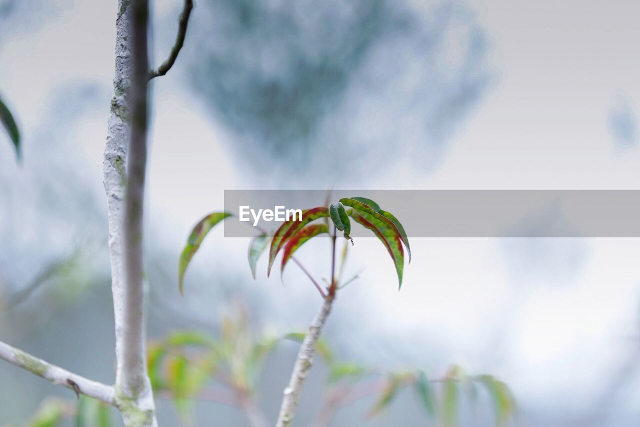 nature, growth, plant, close-up, no people, day, outdoors, beauty in nature, fragility, leaf, winter, freshness
