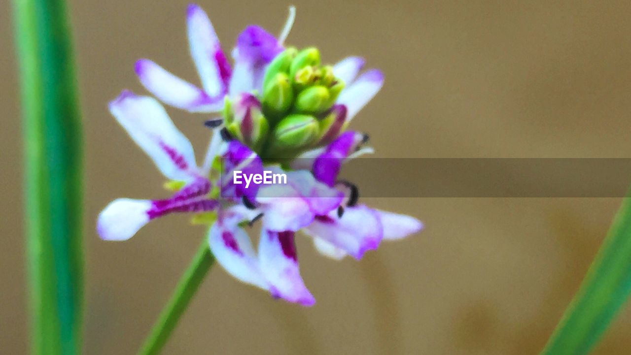 flower, growth, fragility, nature, beauty in nature, freshness, plant, no people, petal, close-up, day, outdoors, flower head, blooming