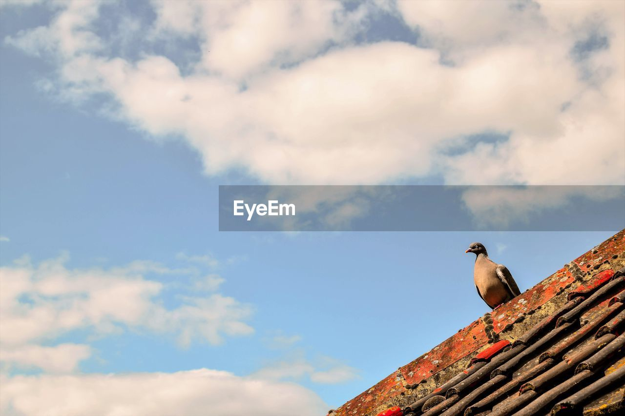 animal themes, bird, one animal, cloud - sky, low angle view, animals in the wild, sky, day, perching, outdoors, roof, animal wildlife, no people, nature