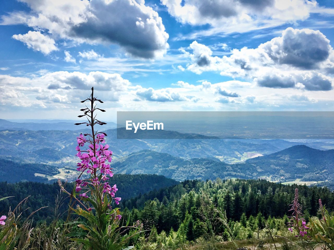 mountain, beauty in nature, nature, mountain range, sky, cloud - sky, scenics, day, outdoors, tranquil scene, no people, tranquility, landscape, flower, tree, scenery