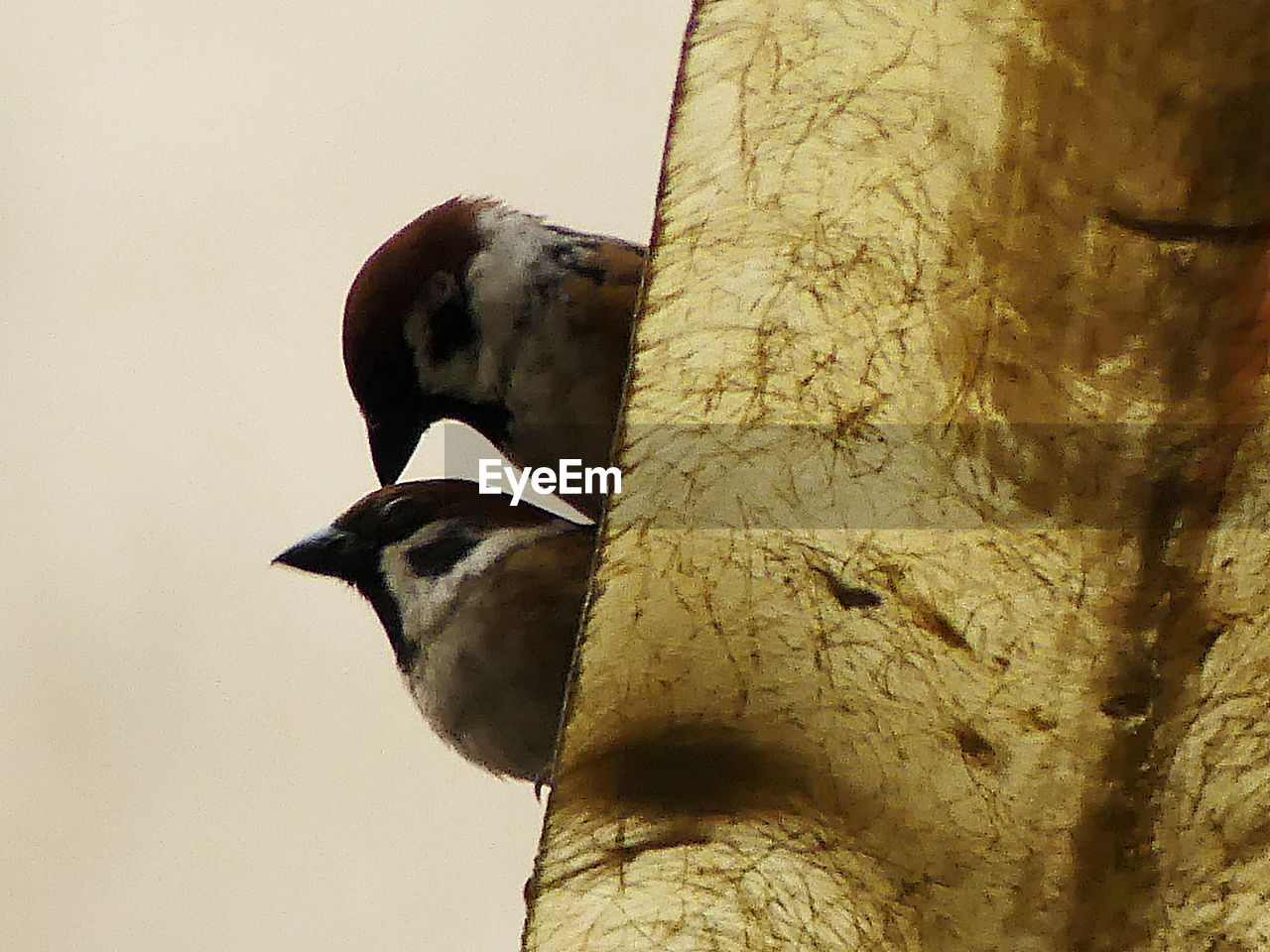 animal themes, animal, vertebrate, animal wildlife, animals in the wild, bird, one animal, no people, low angle view, tree, nature, day, trunk, tree trunk, close-up, outdoors, perching, sky, branch, clear sky, woodpecker