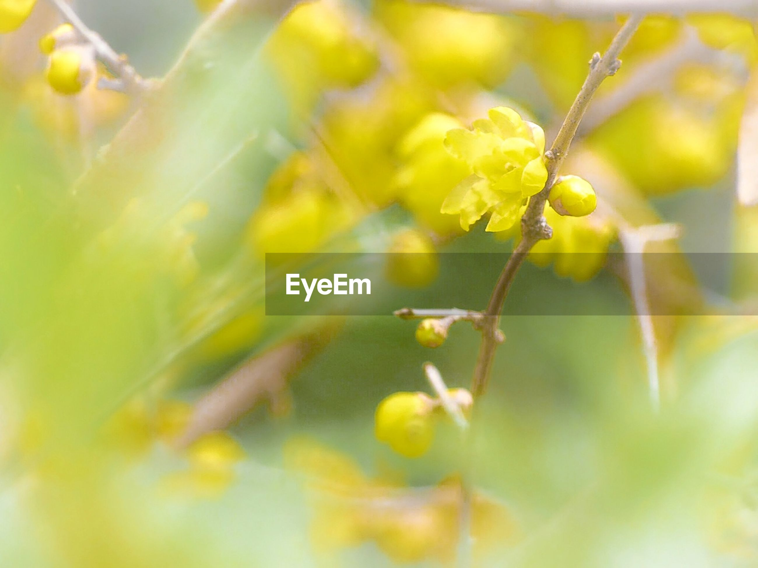 yellow, animal themes, nature, close-up, insect, growth, no people, animals in the wild, plant, one animal, animal wildlife, outdoors, beauty in nature, day, freshness, spider web