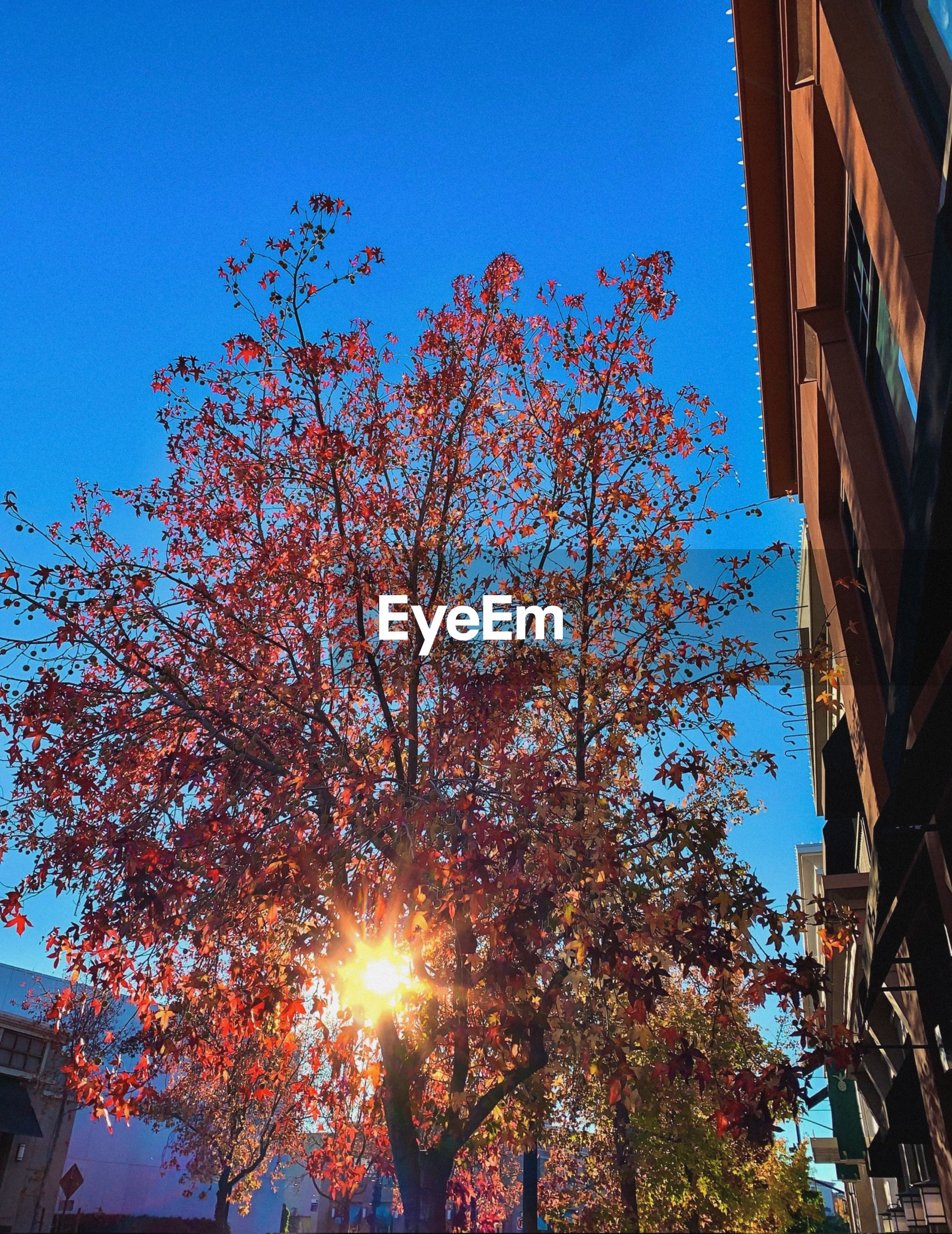 LOW ANGLE VIEW OF CHERRY TREE AGAINST BUILDINGS