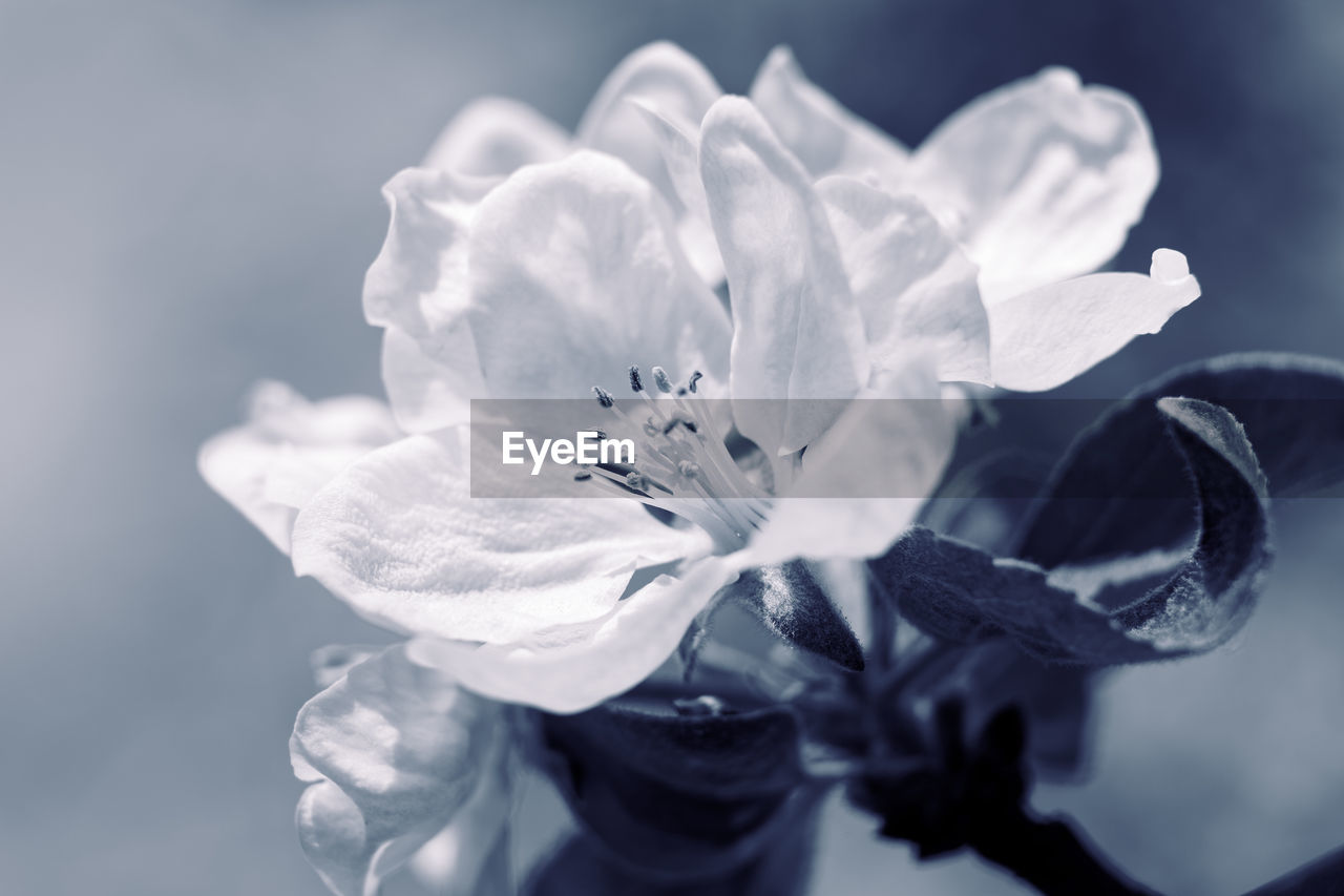 flowering plant, flower, fragility, vulnerability, petal, beauty in nature, freshness, plant, flower head, growth, inflorescence, pollen, close-up, nature, no people, selective focus, day, stamen, white color, purity, purple