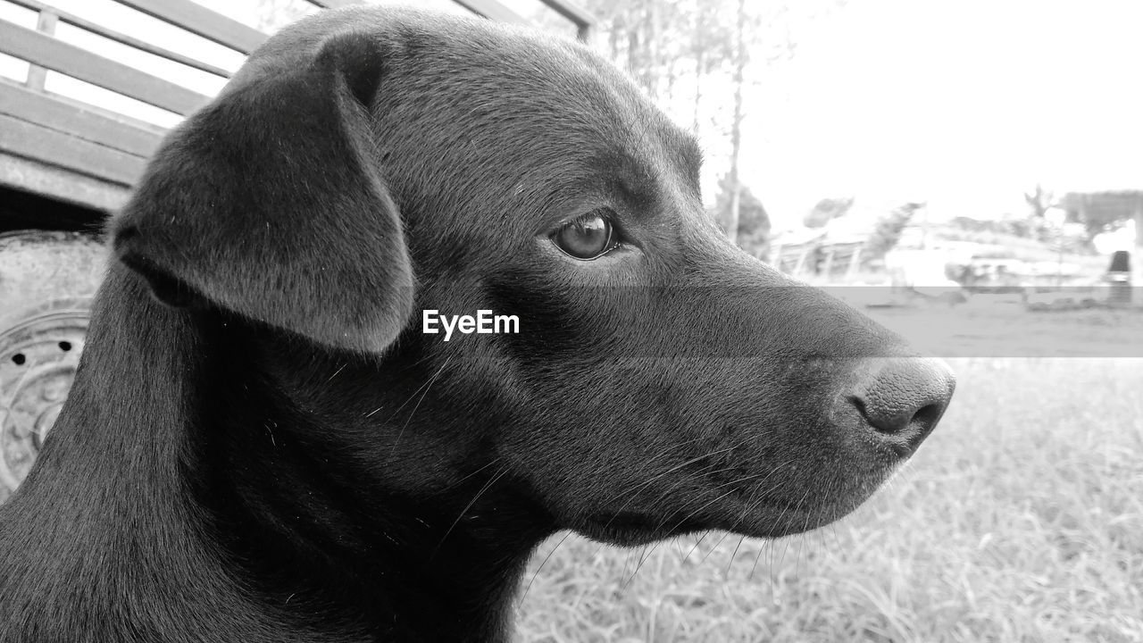 one animal, animal themes, mammal, domestic, pets, animal, close-up, domestic animals, looking, vertebrate, canine, dog, looking away, animal body part, animal head, no people, focus on foreground, day, side view, outdoors, profile view, contemplation, animal eye, animal nose