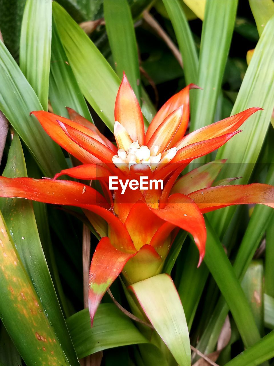 growth, nature, flower, beauty in nature, freshness, petal, red, green color, fragility, plant, outdoors, day, flower head, close-up, blooming, no people, leaf, bird of paradise - plant