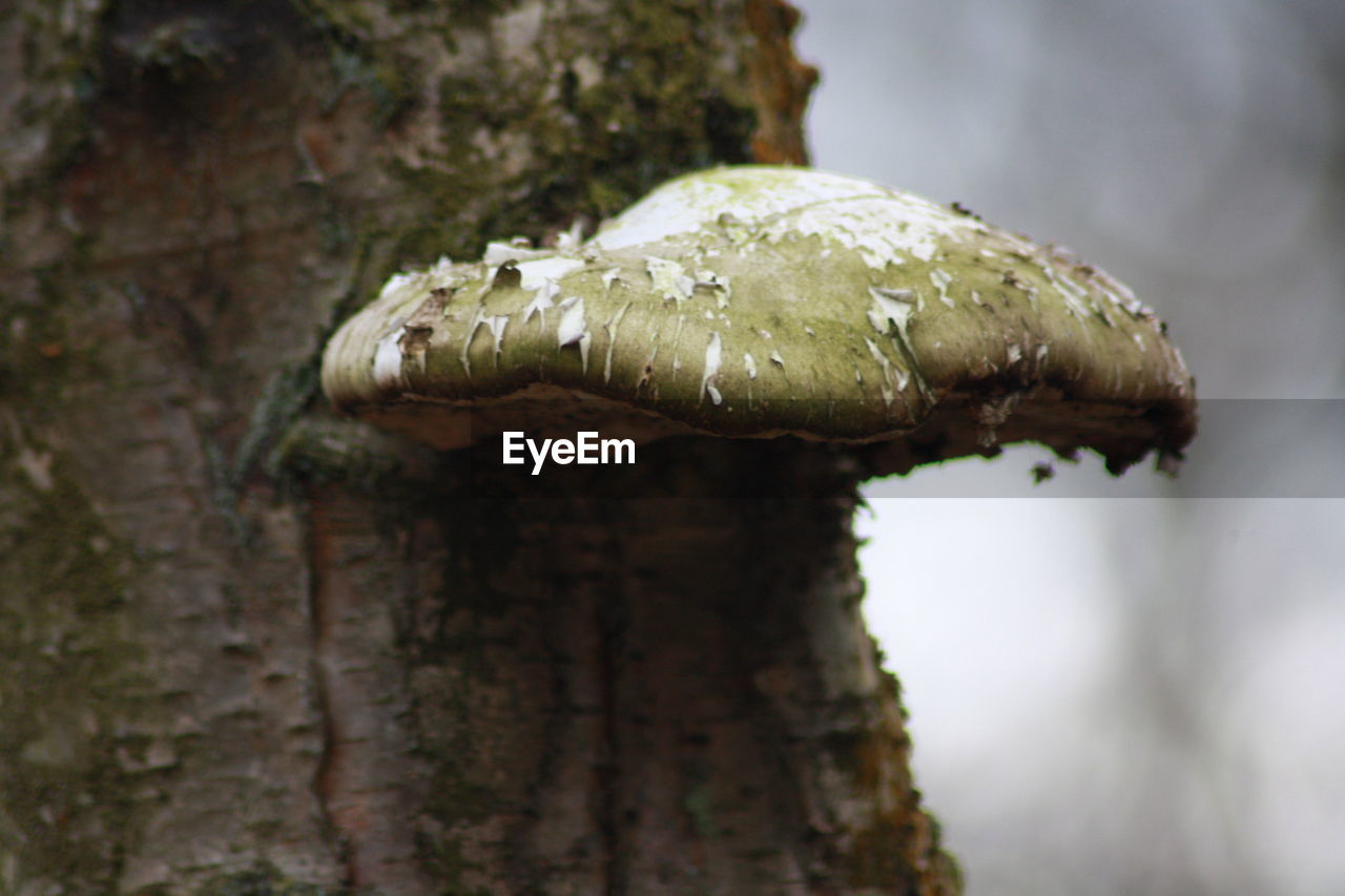 mushroom, fungus, nature, toadstool, no people, focus on foreground, close-up, moss, beauty in nature, outdoors, day, tree trunk, fly agaric, growth, fragility, tree, freshness