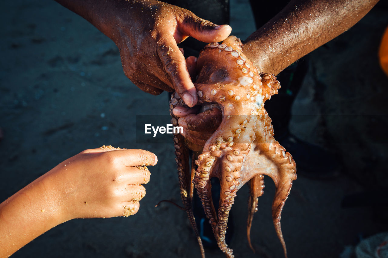 High Angle View Of Hands Holding Octopus