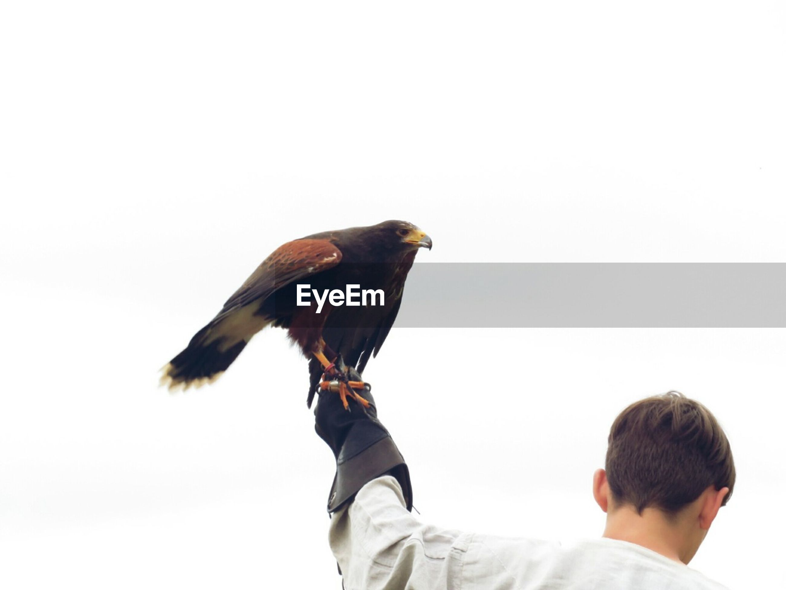 VIEW OF BIRD AGAINST CLEAR SKY