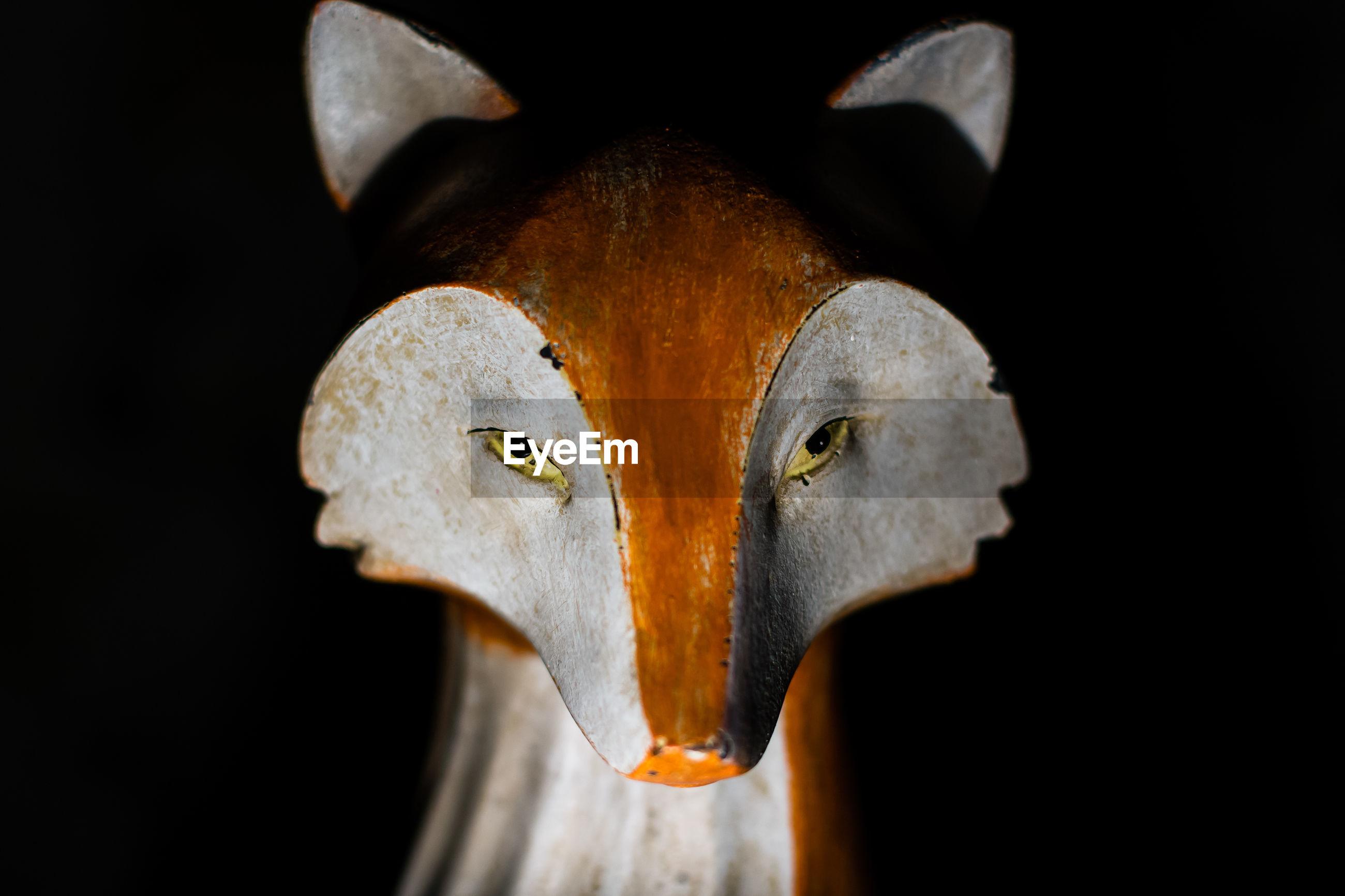 Close up of a fox