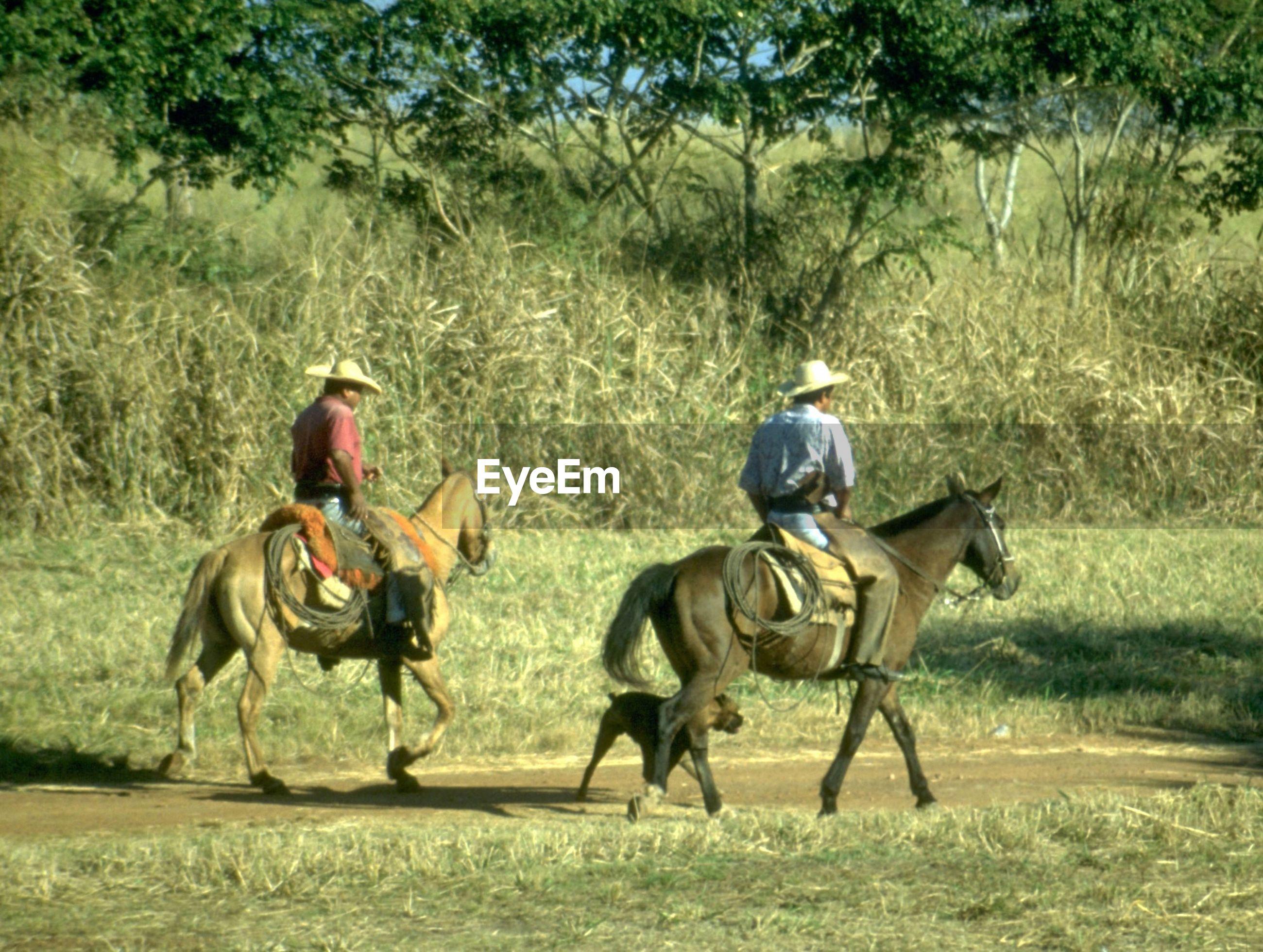 PEOPLE RIDING HORSES ON GRASSLAND