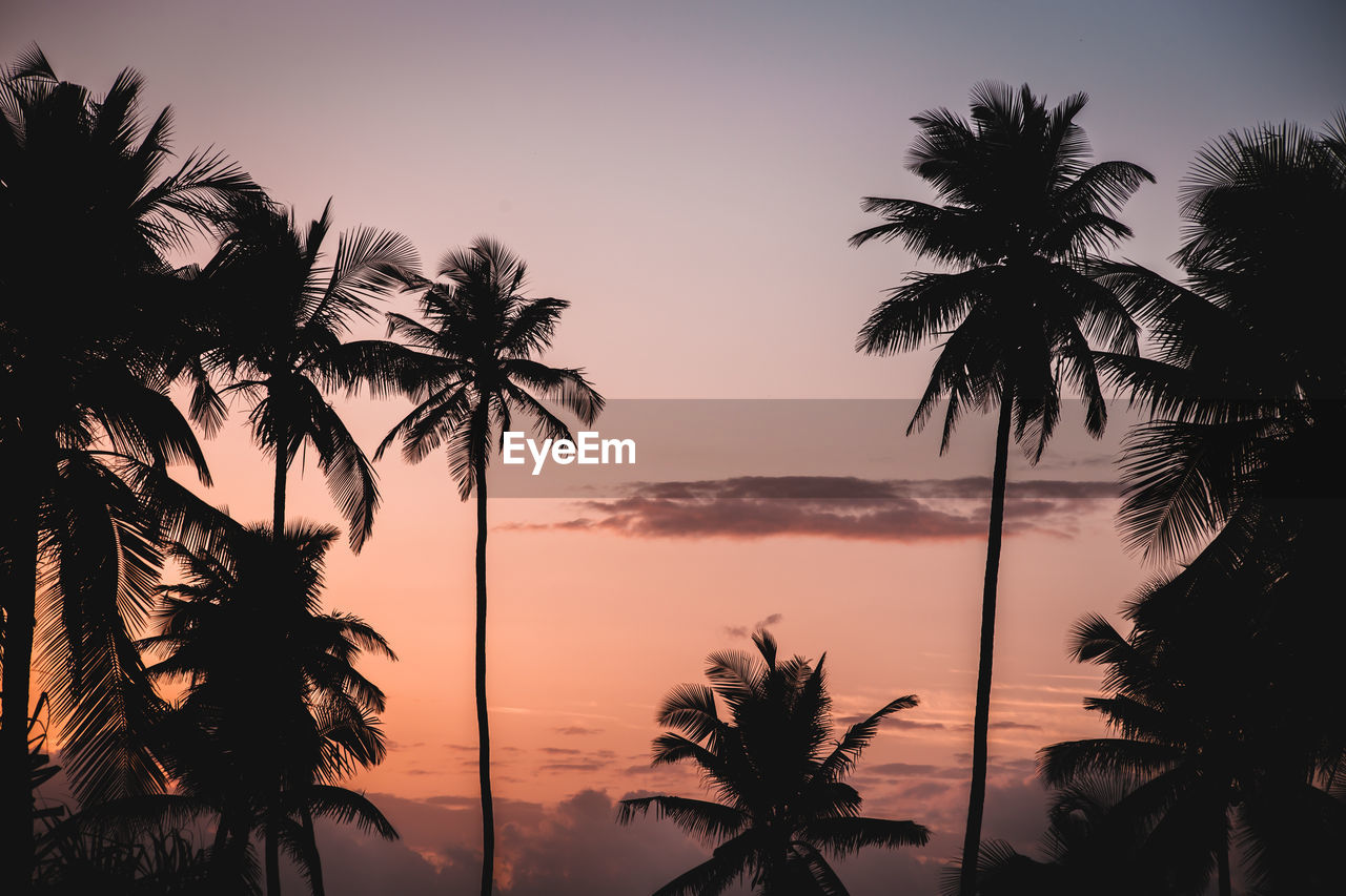 palm tree, sunset, sky, tree, tropical climate, beauty in nature, plant, silhouette, tranquility, scenics - nature, tranquil scene, no people, nature, orange color, growth, outdoors, idyllic, non-urban scene, water, coconut palm tree, tropical tree, palm leaf, romantic sky