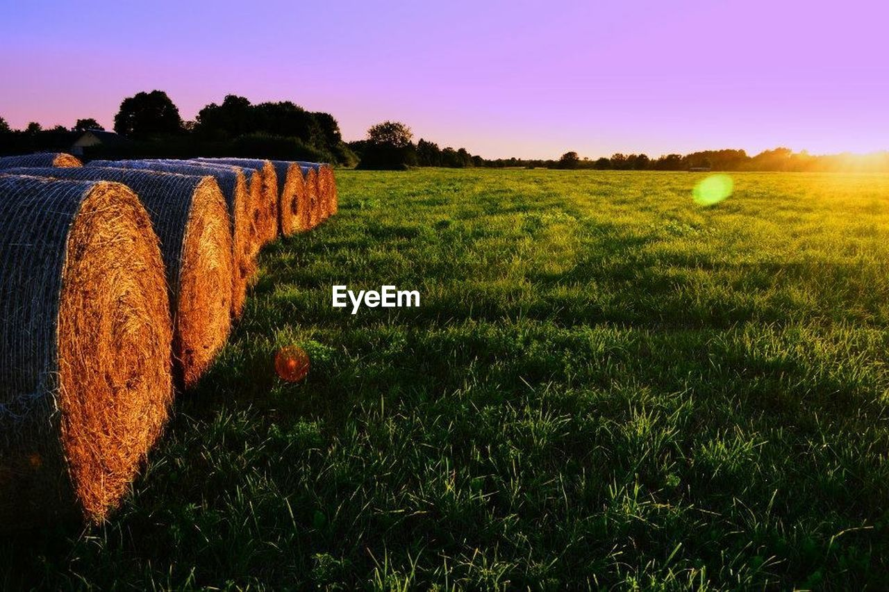 field, grass, tree, agriculture, tranquil scene, rural scene, bale, landscape, sunset, nature, scenics, outdoors, no people, tranquility, sky, beauty in nature, clear sky, hay bale, multi colored, day