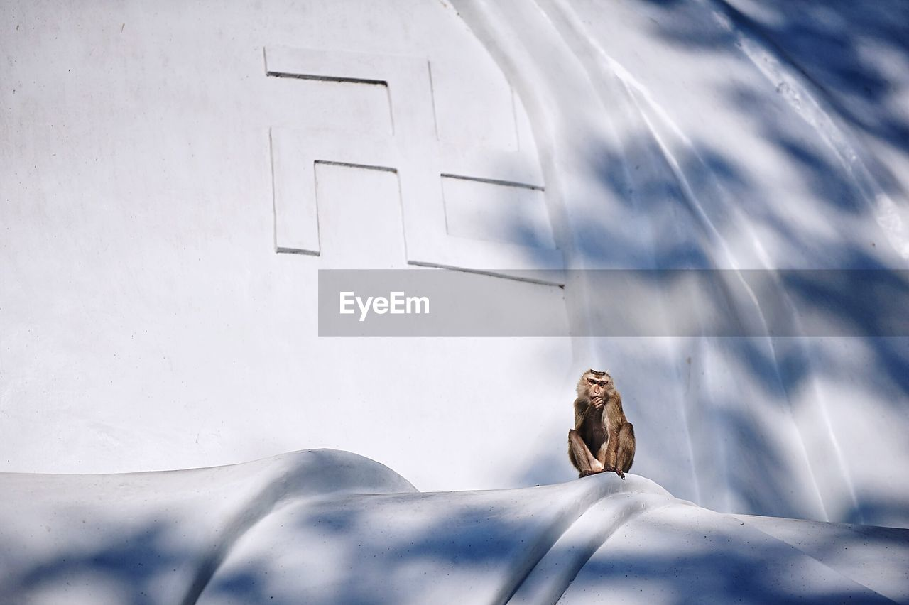 Close-up of monkey sitting on building