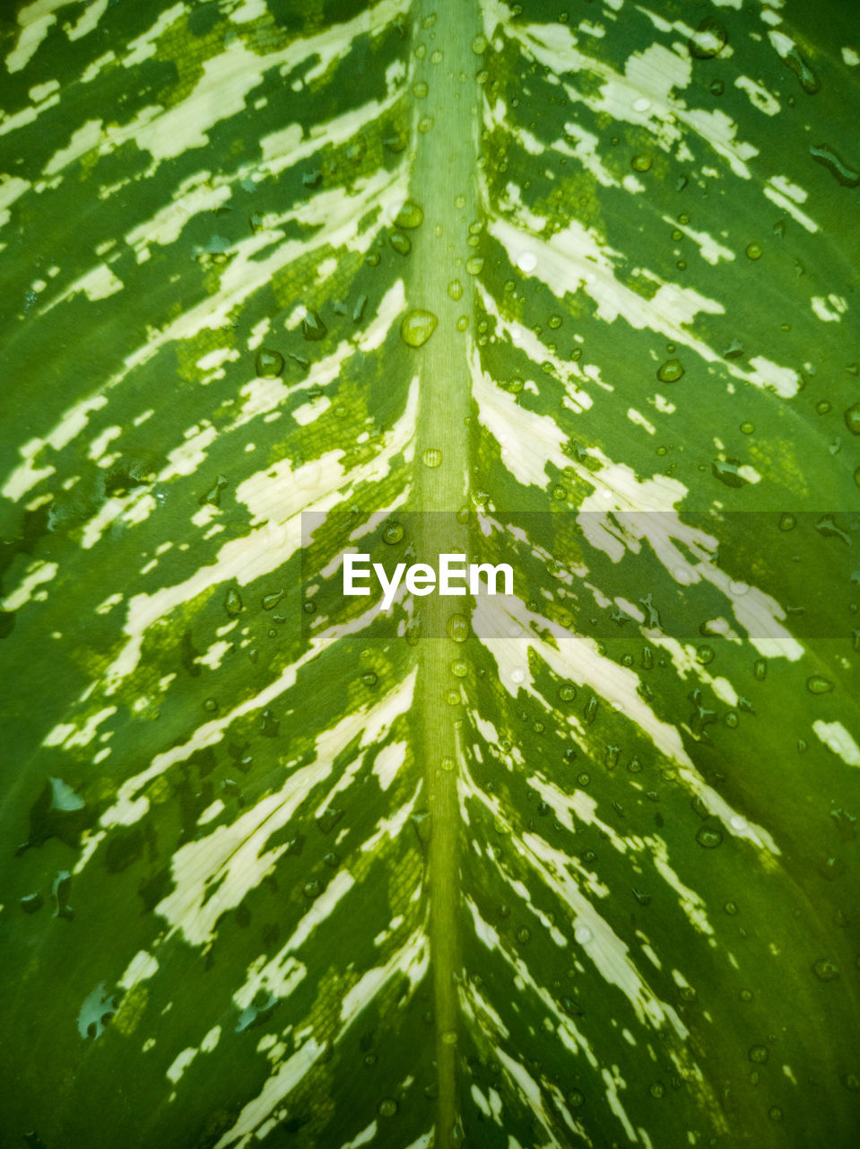 green color, leaf, plant part, plant, growth, nature, full frame, no people, backgrounds, beauty in nature, close-up, day, freshness, water, wet, drop, outdoors, natural pattern, pattern, palm leaf, rain, leaves, purity, dew