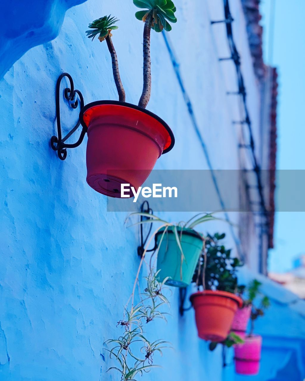 plant, nature, hanging, decoration, day, built structure, no people, architecture, low angle view, lighting equipment, metal, wall - building feature, focus on foreground, outdoors, tree, blue, red, close-up, building exterior, selective focus, electric lamp, flower pot