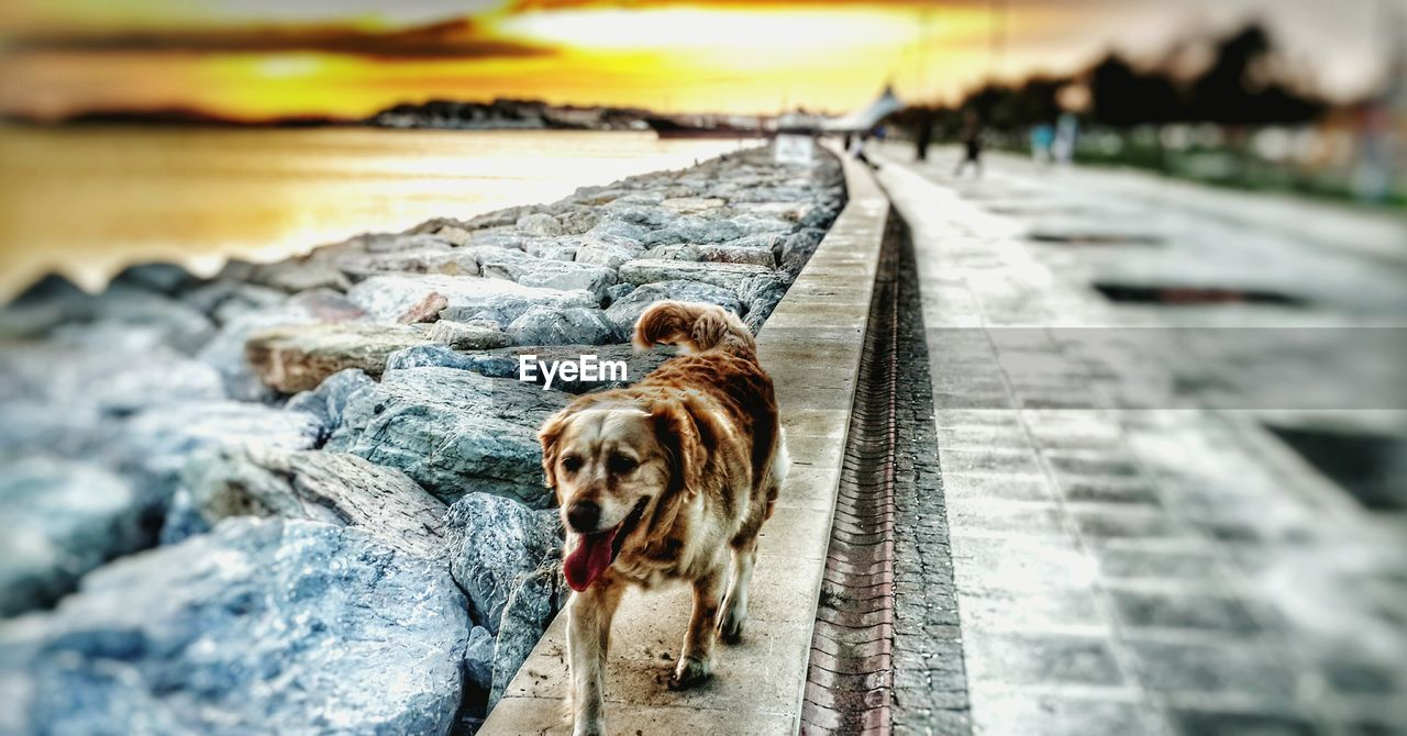 animal themes, one animal, mammal, outdoors, dog, nature, water, day, no people, domestic animals, pets, close-up, sky