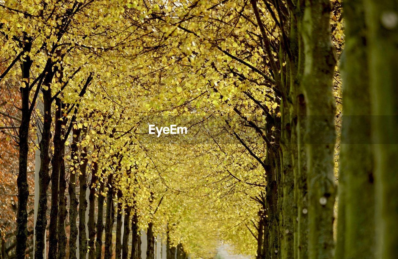 plant, tree, tree trunk, growth, trunk, beauty in nature, nature, no people, autumn, close-up, day, forest, outdoors, green color, change, focus on foreground, tranquility, land, branch, leaf, treelined, bark