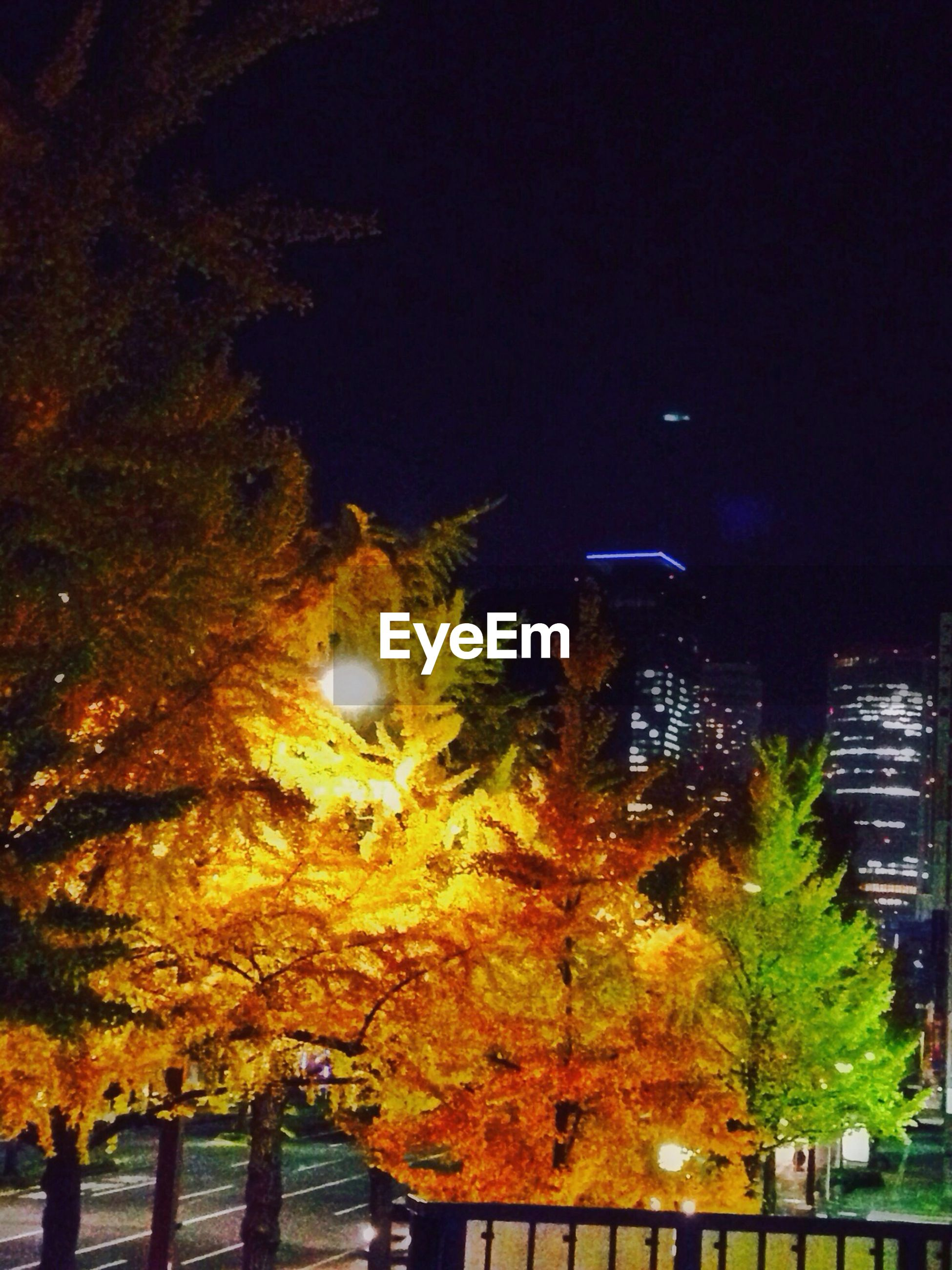 Autumn trees in city at night