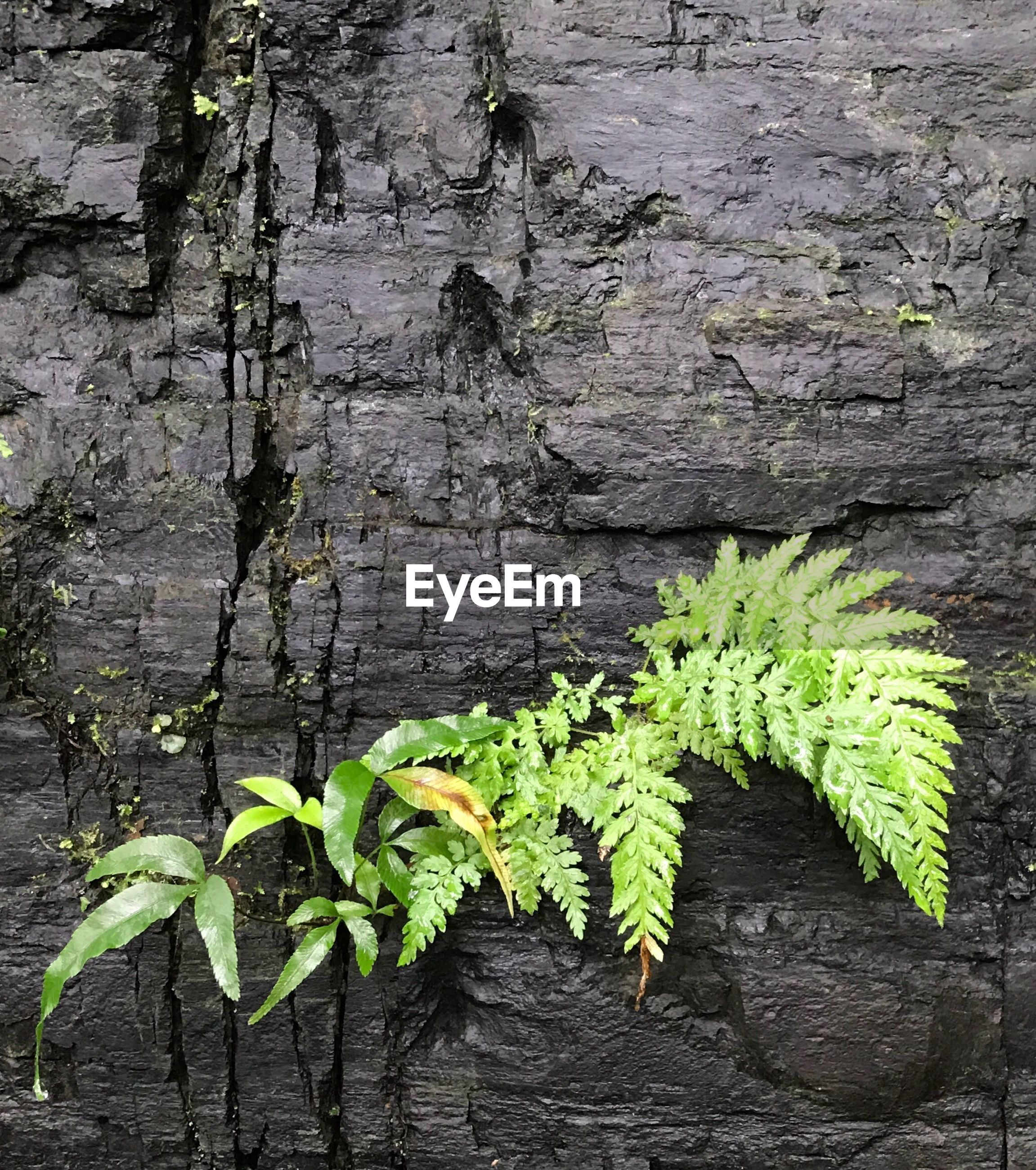 plant, growth, nature, no people, green color, leaf, outdoors, close-up, ivy, day, beauty in nature, freshness