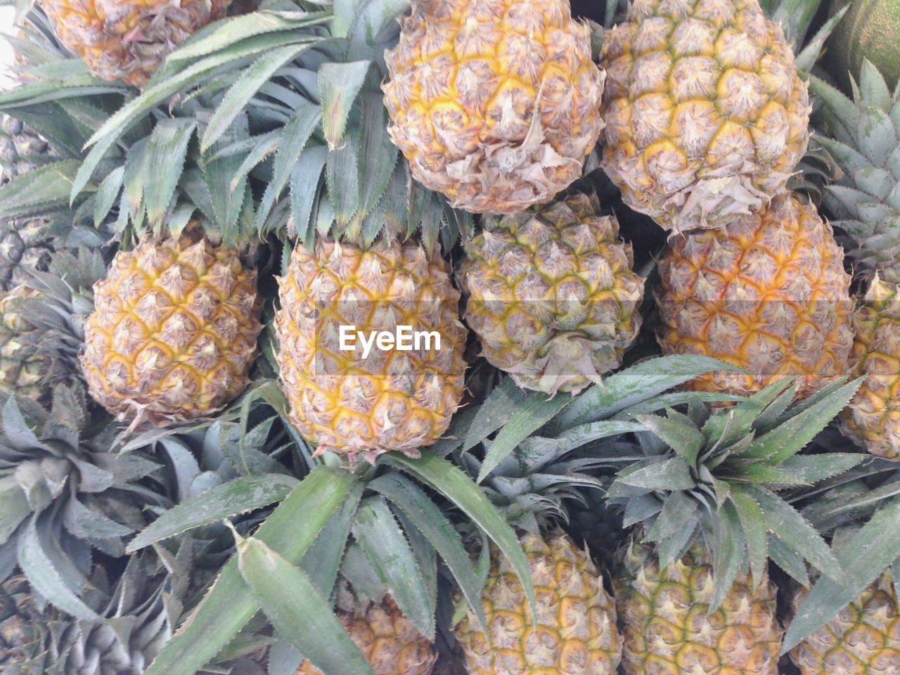 food and drink, pineapple, healthy eating, freshness, food, market, retail, fruit, no people, outdoors, day, large group of objects, close-up