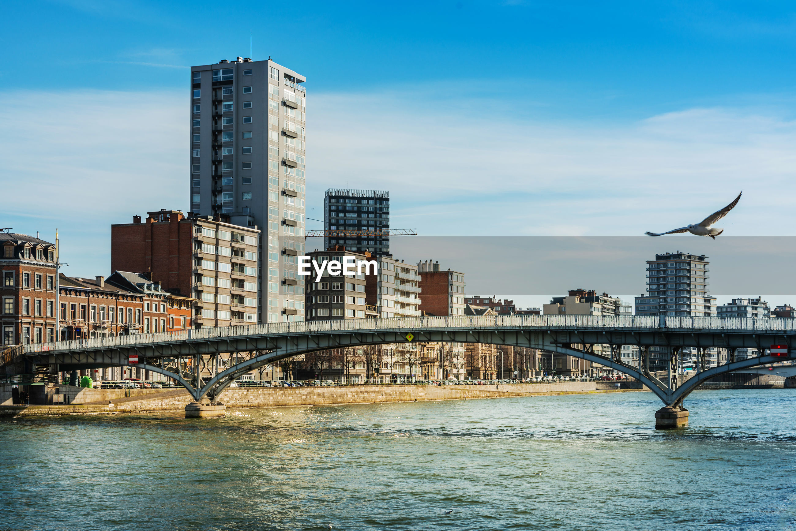 Bird flying over river with buildings in background