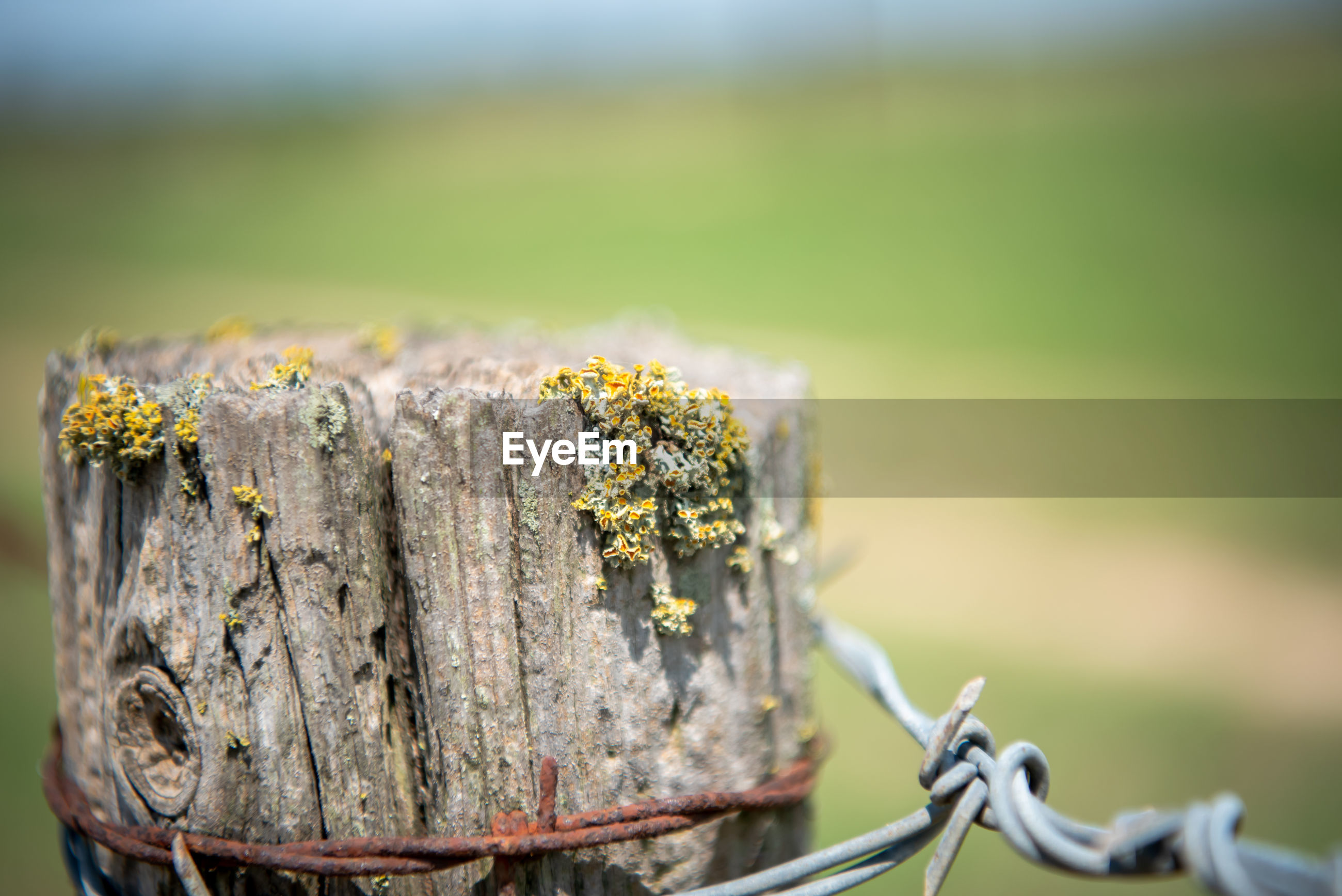 CLOSE-UP OF RUSTY METAL FENCE IN TREE STUMP