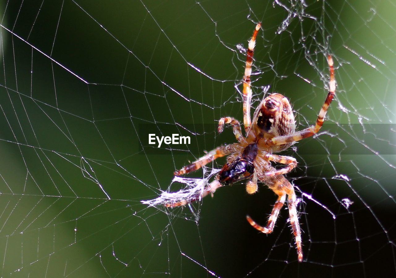 spider web, fragility, animal themes, animal wildlife, animal, animals in the wild, invertebrate, spider, arachnid, one animal, arthropod, close-up, vulnerability, insect, focus on foreground, nature, web, survival, no people, day, outdoors, animal leg, complexity