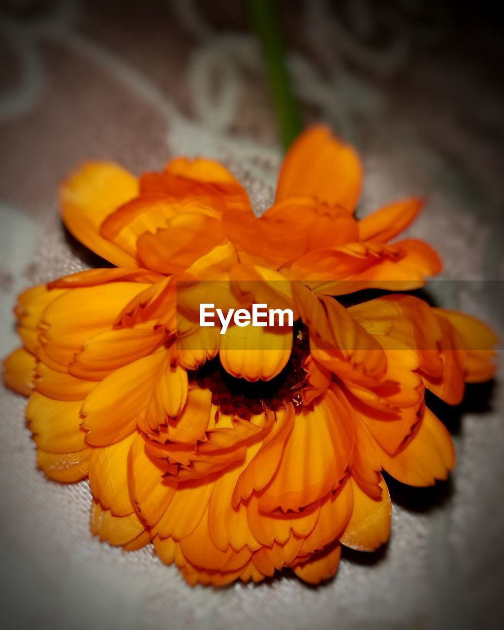 flower, petal, flower head, freshness, orange color, beauty in nature, fragility, yellow, nature, no people, close-up, marigold, indoors, day, hibiscus