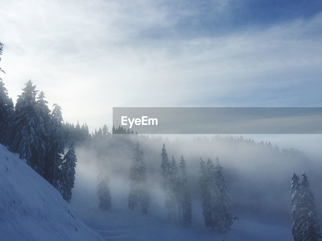 TREES ON SNOW COVERED MOUNTAINS AGAINST SKY