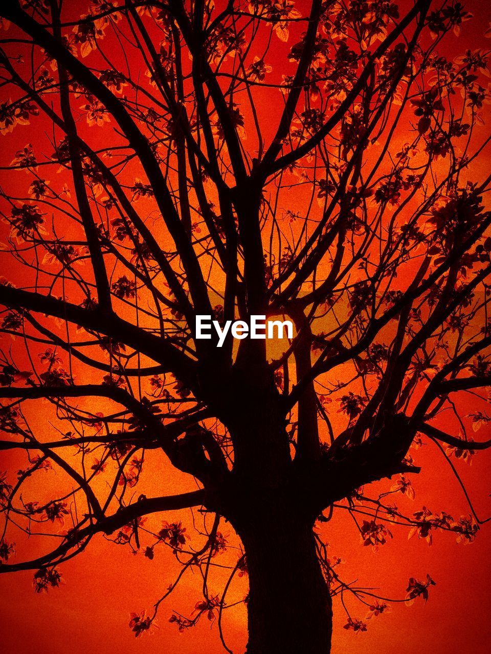 sunset, silhouette, branch, tree, orange color, plant, sky, beauty in nature, low angle view, no people, nature, scenics - nature, tranquility, bare tree, outdoors, growth, tranquil scene, tree trunk, trunk, idyllic