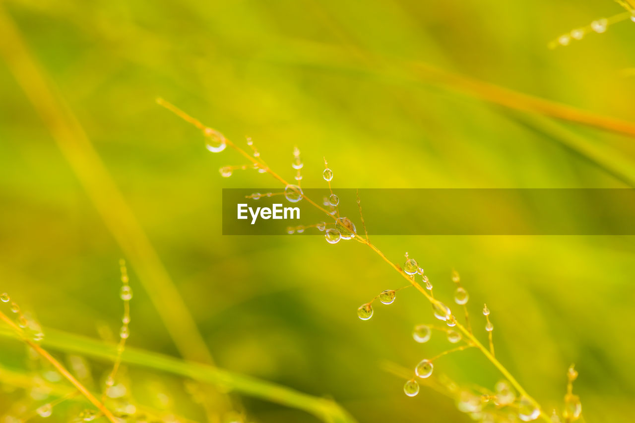 drop, water, wet, plant, close-up, beauty in nature, nature, fragility, selective focus, vulnerability, no people, growth, freshness, green color, day, focus on foreground, dew, leaf, plant part, outdoors, blade of grass, rain, raindrop, purity, rainy season