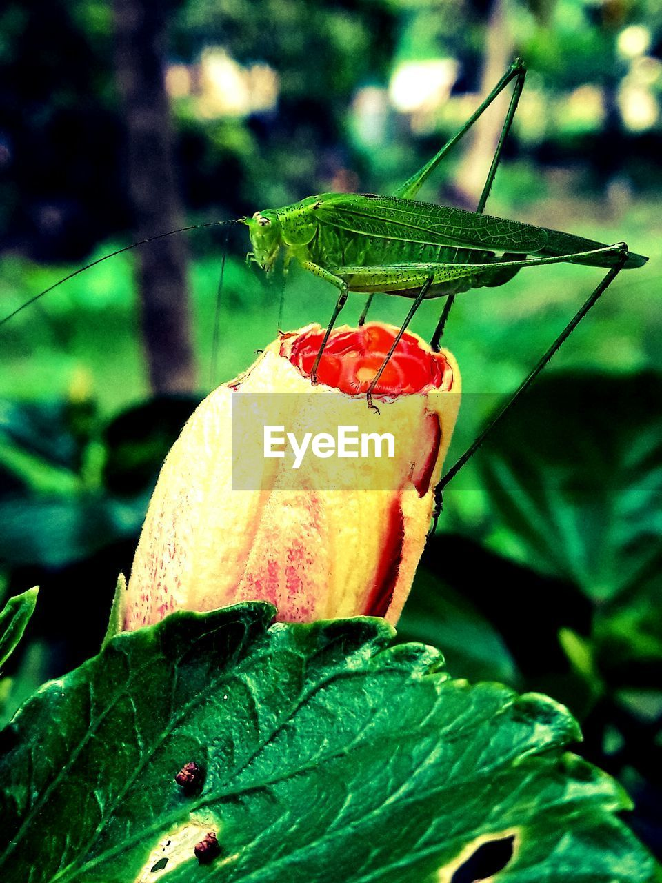insect, animals in the wild, animal themes, leaf, one animal, close-up, green color, focus on foreground, wildlife, red, nature, outdoors, day, no people, plant, animal wildlife, growth, beauty in nature, fragility, perching, freshness, flower head