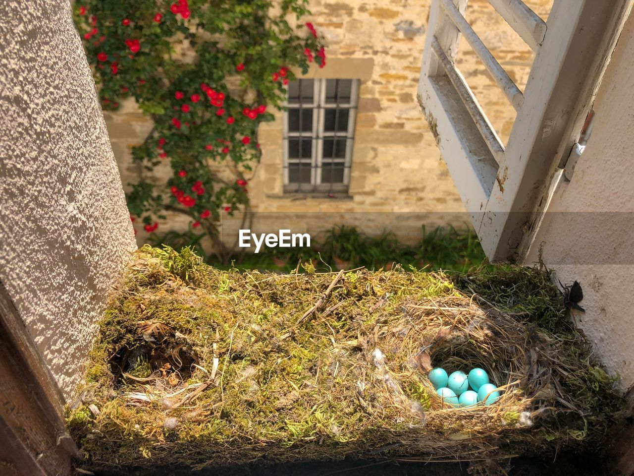 plant, nature, architecture, built structure, day, flower, flowering plant, high angle view, building exterior, window, no people, building, outdoors, potted plant, growth, grass, egg, house, sunlight, close-up