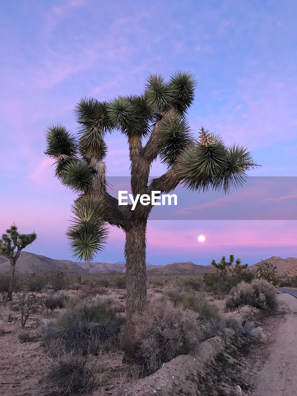 plant, sky, tree, beauty in nature, tranquility, growth, tranquil scene, land, scenics - nature, nature, non-urban scene, desert, field, environment, no people, landscape, outdoors, cactus, sunset, succulent plant, arid climate, climate
