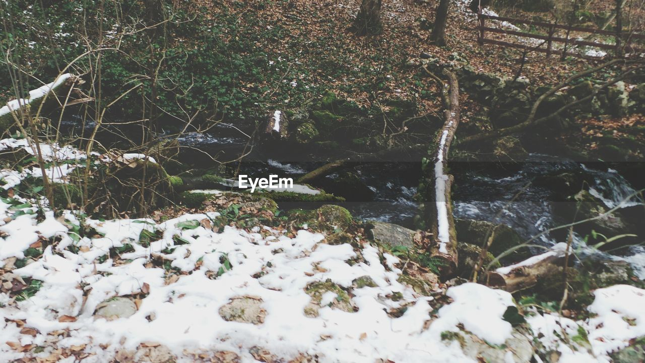 nature, no people, beauty in nature, outdoors, day, winter, tranquility, forest, close-up, cold temperature, tree, water