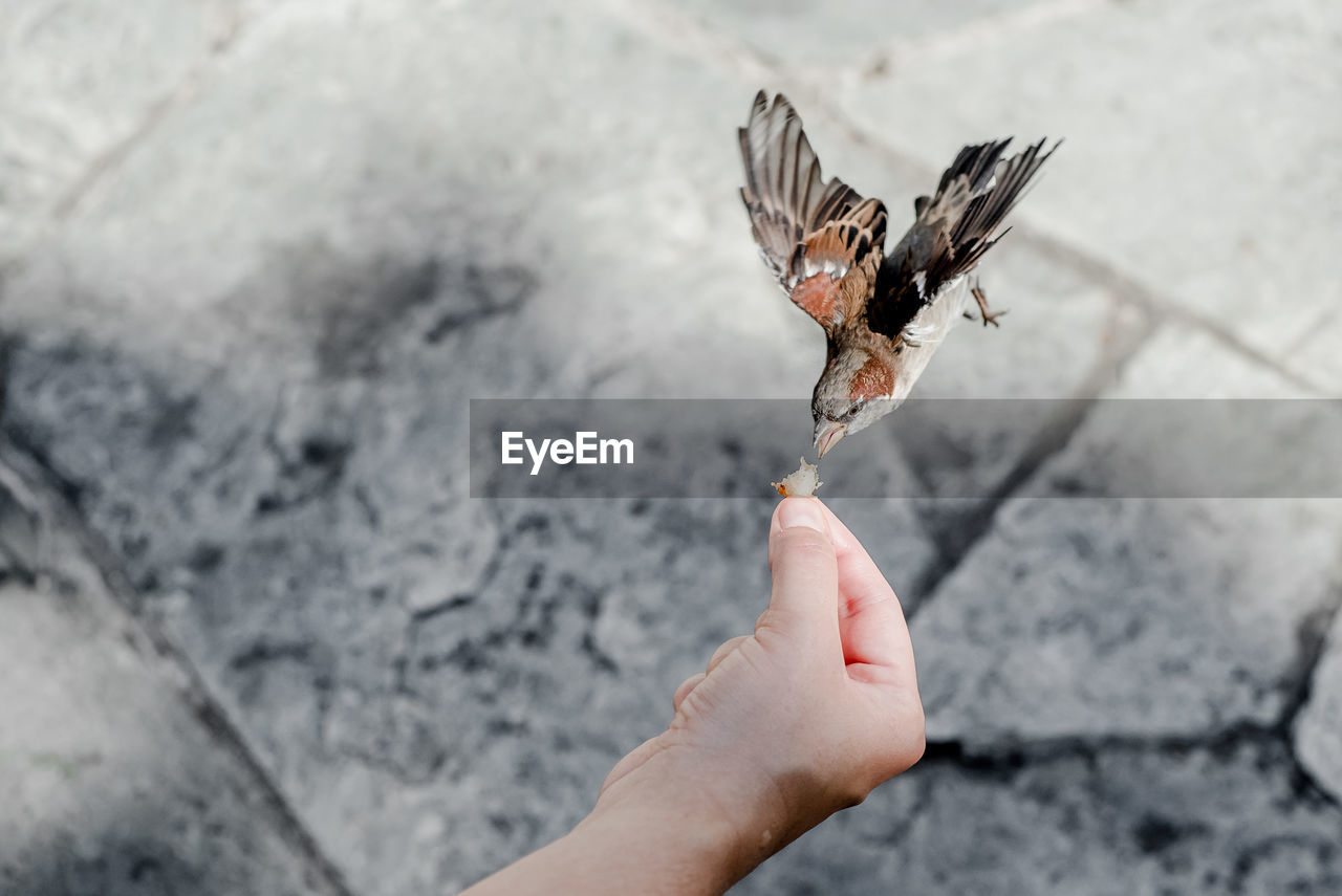 human hand, human body part, hand, one person, body part, day, real people, personal perspective, human finger, finger, holding, focus on foreground, outdoors, close-up, unrecognizable person, lifestyles, food, animal wildlife