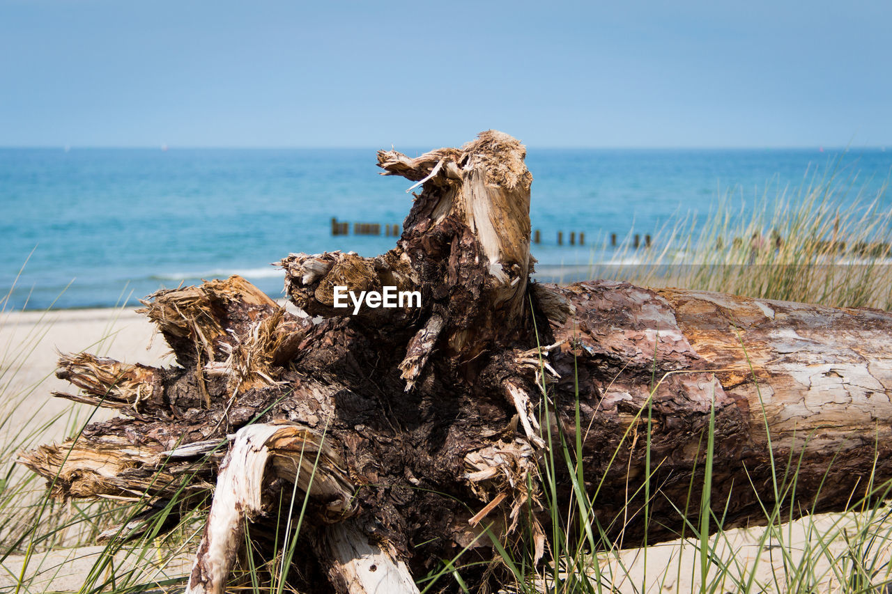 sea, water, horizon over water, sky, horizon, land, beach, nature, day, wood - material, tranquility, no people, plant, beauty in nature, focus on foreground, scenics - nature, tranquil scene, wood, outdoors, dead plant, driftwood, bark, wooden post