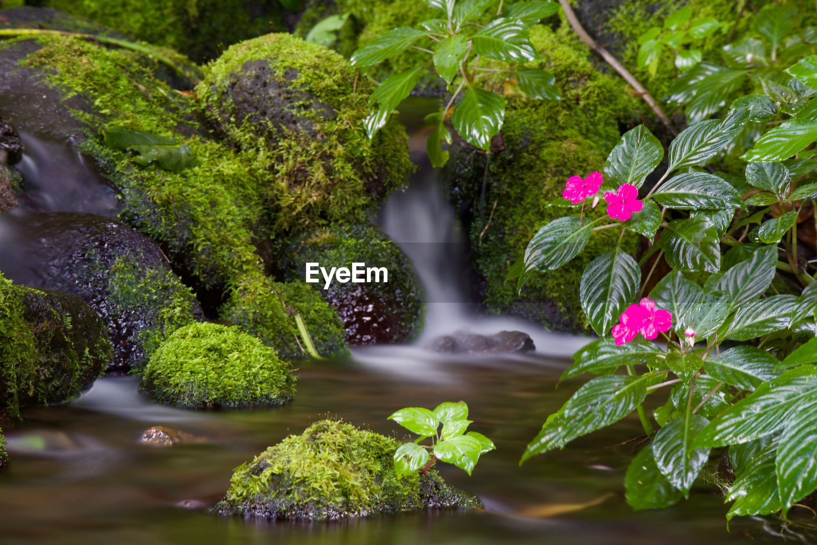 SCENIC VIEW OF WATER FLOWING AMIDST PLANTS