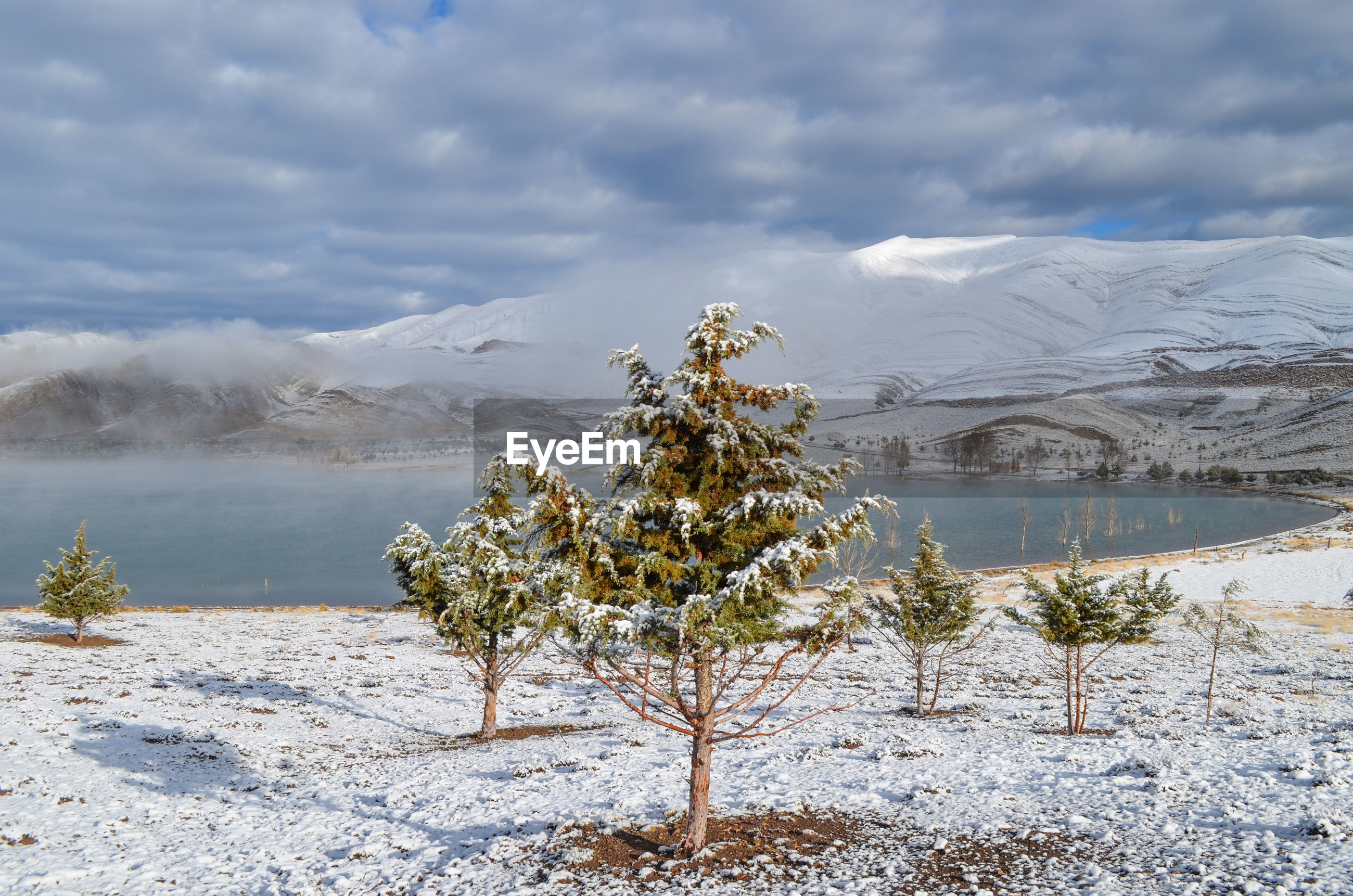 SCENIC VIEW OF TREE BY LAKE AGAINST SKY