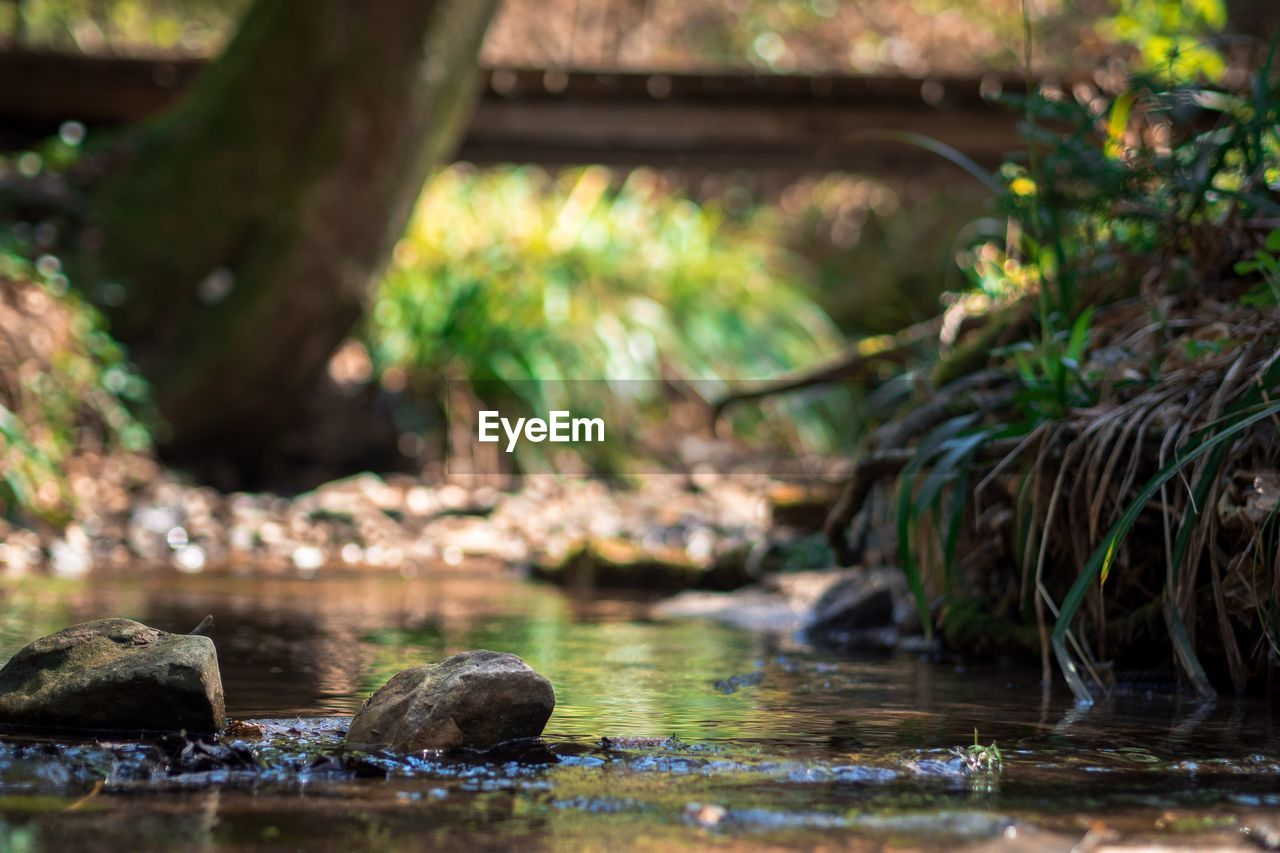 water, rock - object, no people, day, outdoors, nature, focus on foreground, waterfront, river, tree, plant, beauty in nature, close-up, animal themes, mammal