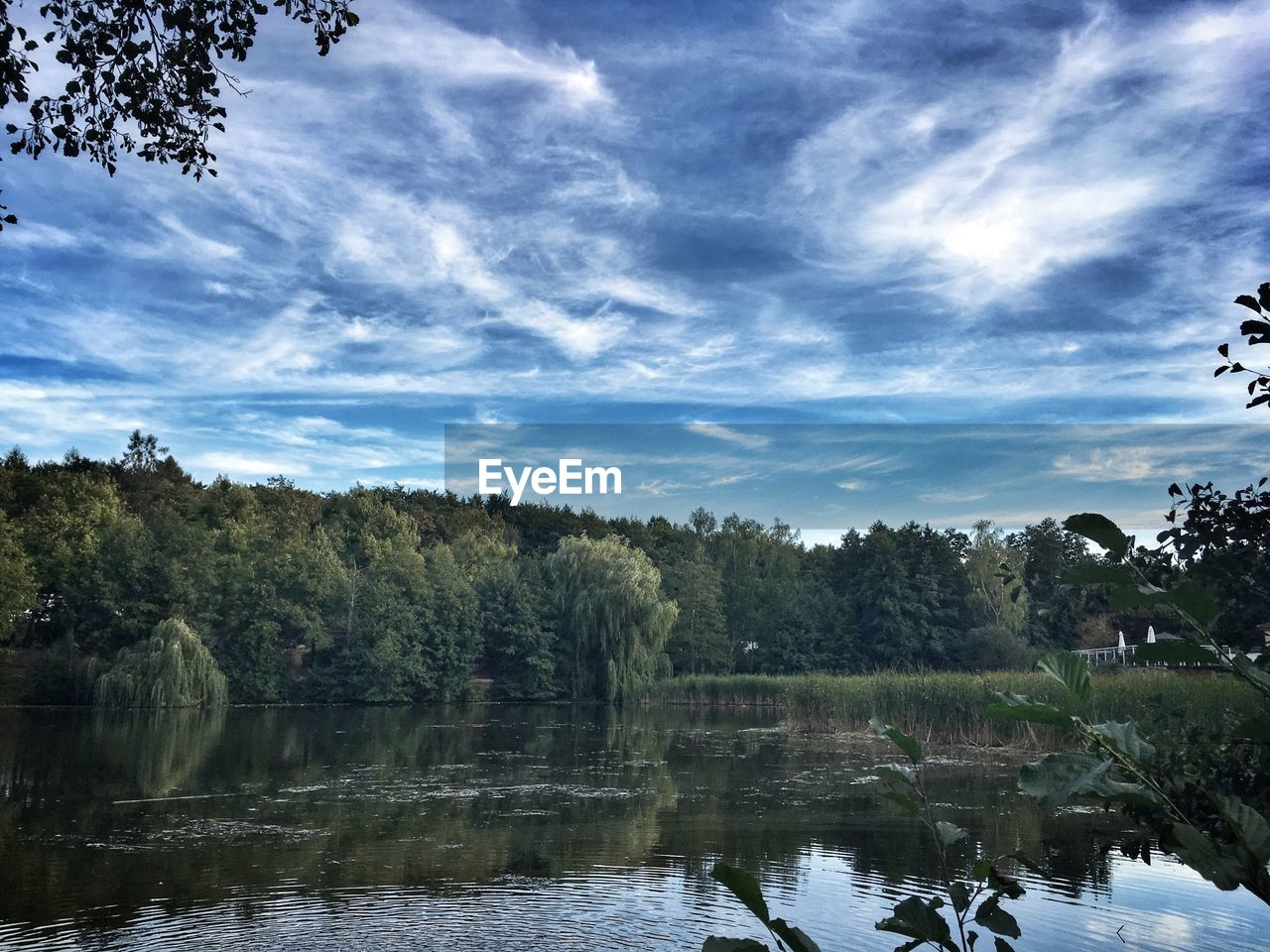 tree, water, plant, sky, cloud - sky, beauty in nature, scenics - nature, lake, tranquility, nature, reflection, tranquil scene, day, no people, growth, non-urban scene, forest, outdoors