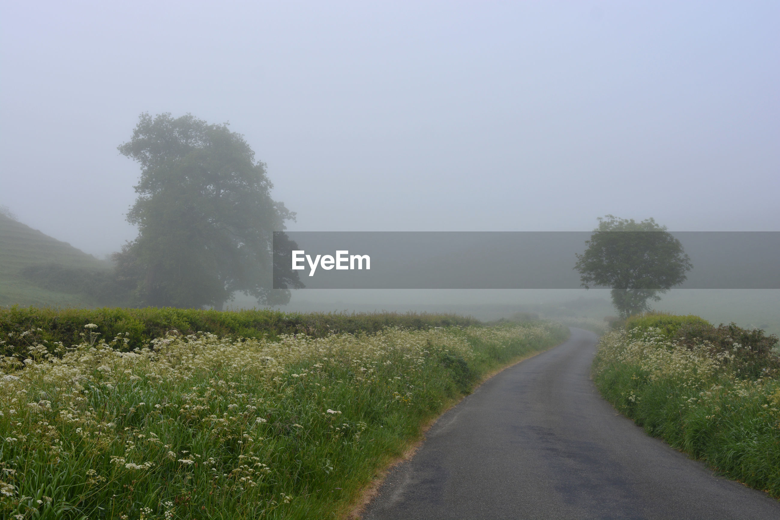 Foggy country lane in late spring, between oborne and poyntington, sherborne, dorset, england