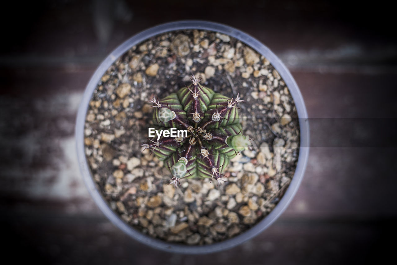 High angle view of potted plant