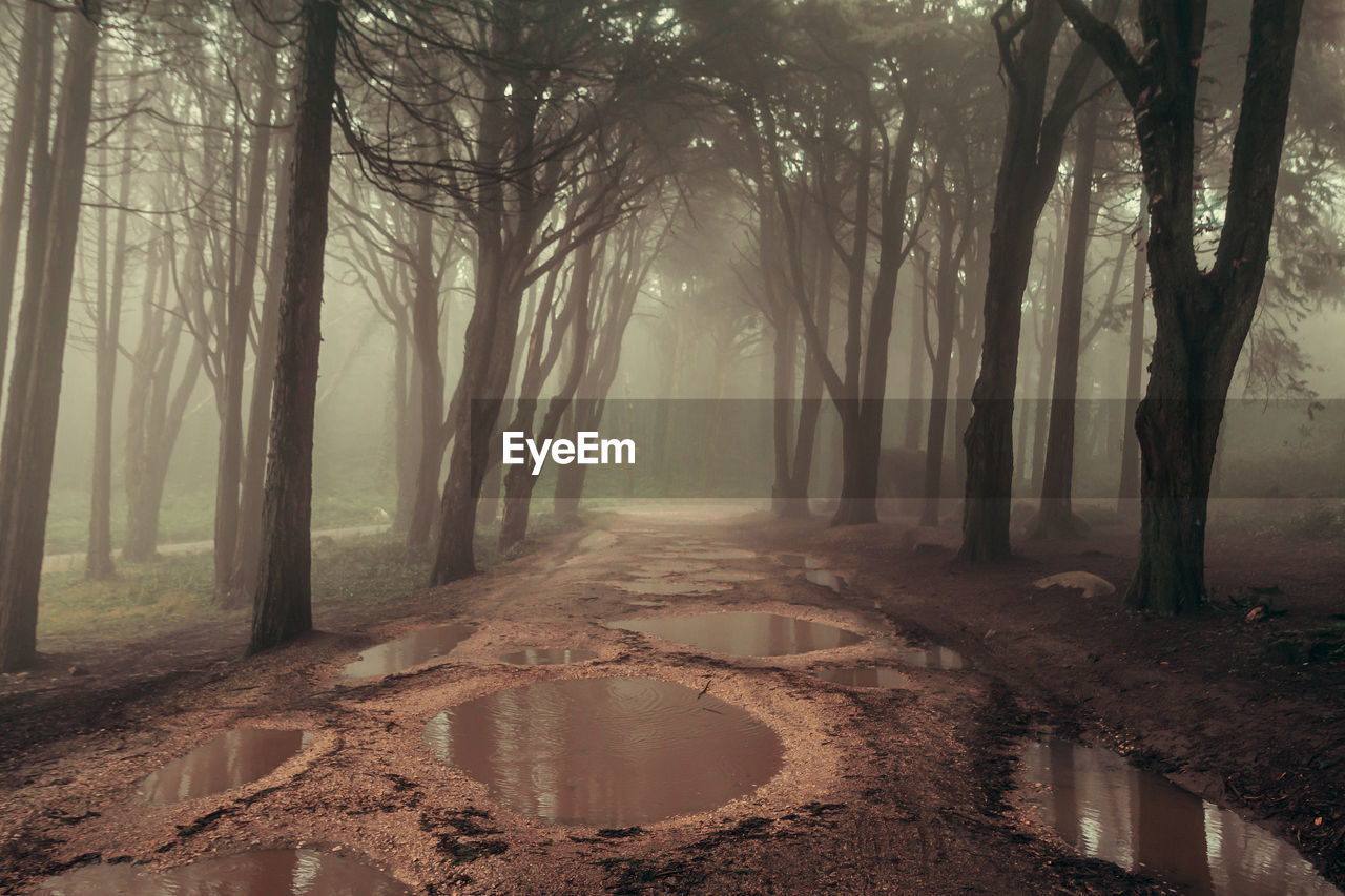 tree, plant, tranquility, nature, tree trunk, land, tranquil scene, trunk, forest, direction, no people, water, road, the way forward, beauty in nature, scenics - nature, dirt, day, fog, woodland, outdoors